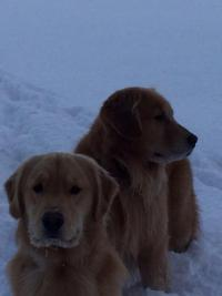Birkie and Tanner