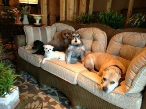 oscar, Rudie, Wes, Bella and Turtle