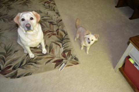 Jessie and Rodney