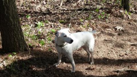 Fiona - hiking buddy, explorer, chipmunk nemesis