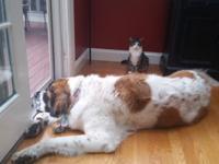Daisy and Bella
