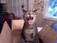Dingo Gail's cat